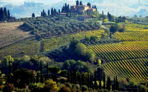 Looking at hilltop vineyard and villa from San Gimignano, courtesy of Denise and Garry Simpson